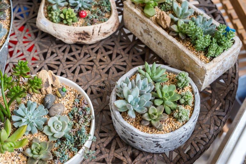 Download Miniatyrsuckulentväxter arkivfoto. Bild av förnybart - 76702190