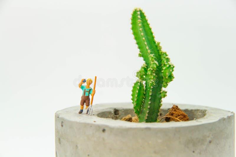 Miniatyrträdgårdsmästare på den isolerade kaktusblomkrukan arkivbild