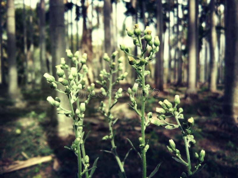 Minibloemen stock foto's