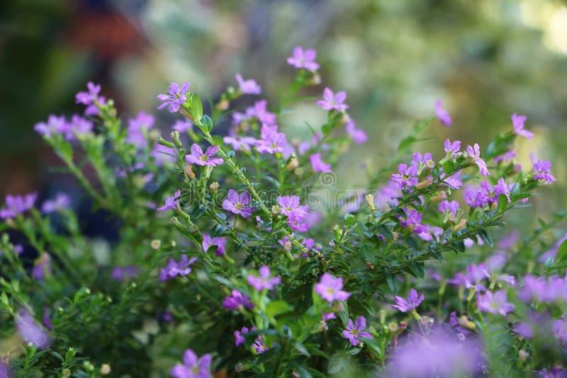 Minibloemen in de tuin stock afbeelding