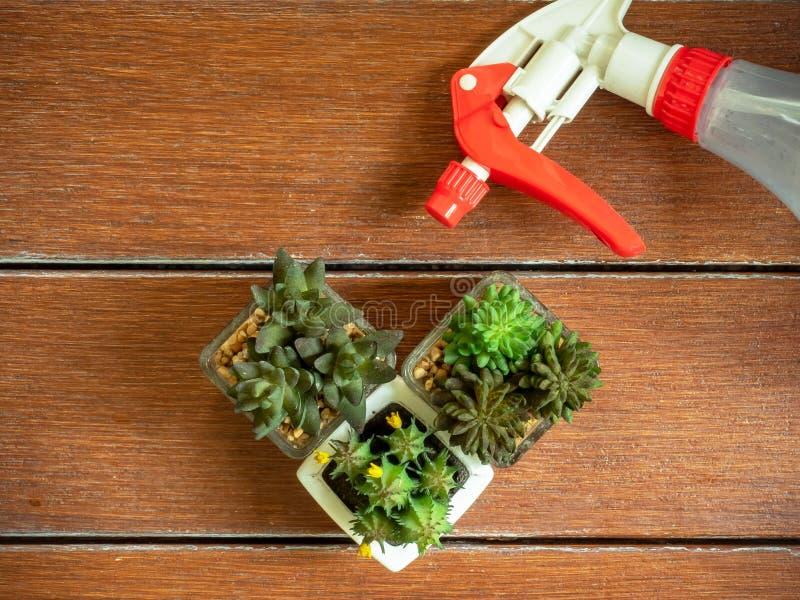 Minicactus en Mistige die nevelfles op lijstbovenkant van bevlekte bruine houten planken wordt gemaakt stock foto