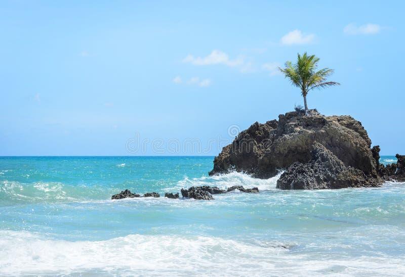Minieiland met één enkele die kokospalm door zeewater wordt omringd en sommige rotsvormingen in een paradisiacal zeer mooi landsc royalty-vrije stock fotografie