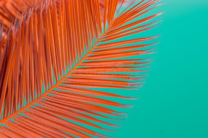 Minimaal concept brunch van palma op pastelkleurachtergrond royalty-vrije stock fotografie