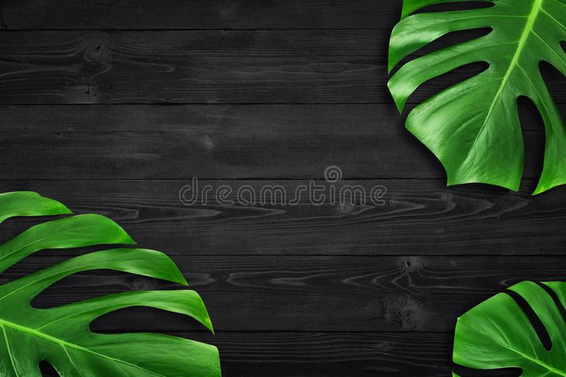 Minimal composition Flat lay green tropical leaf. Creative layout tropic leaves frame with copy space on dark wood background stock photo