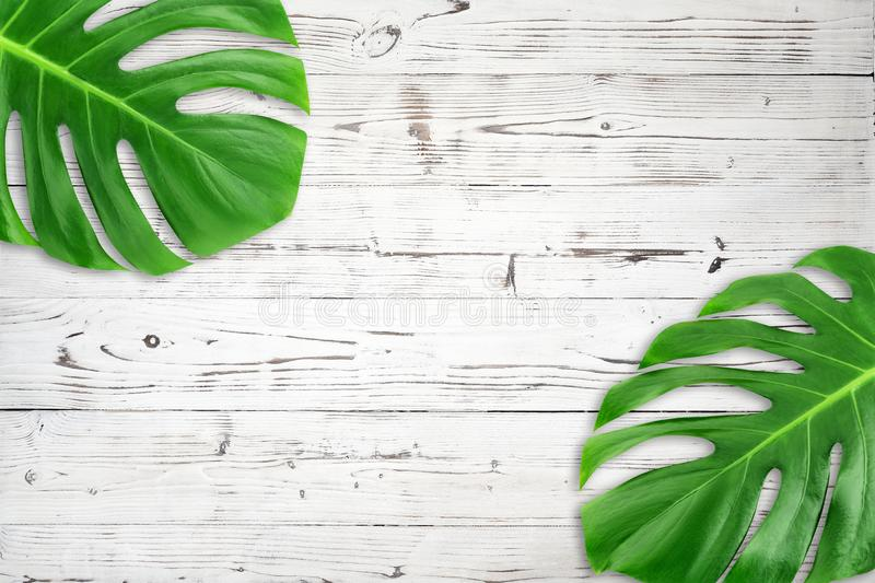 Minimal composition Flat lay green tropical leaf. Creative layout tropic leaves frame with copy space on white wood background. royalty free stock photography