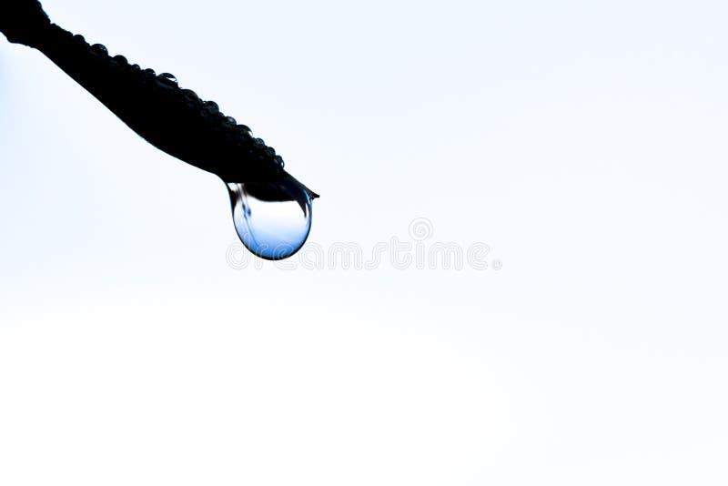 Minimal dew drop stock photos