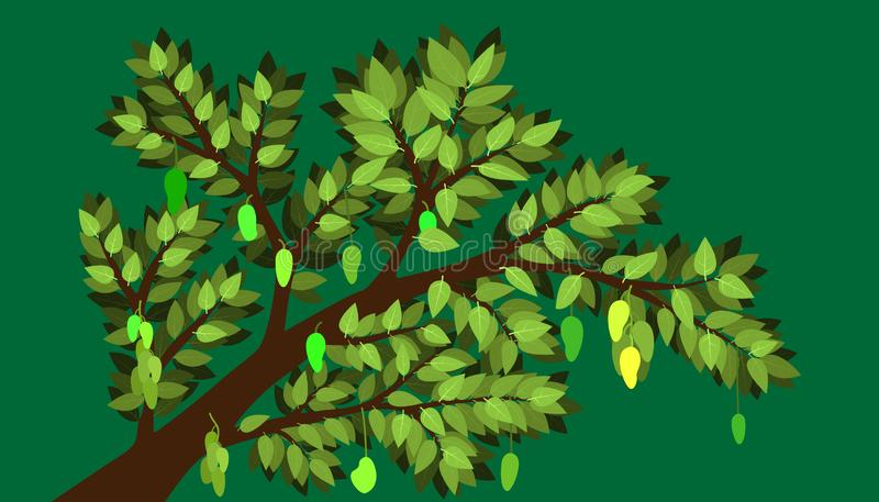 The minimal mango and tree with big branch and element of leaf and many product. fruit and plant natural. vector illustration. The minimal mango and tree with stock images