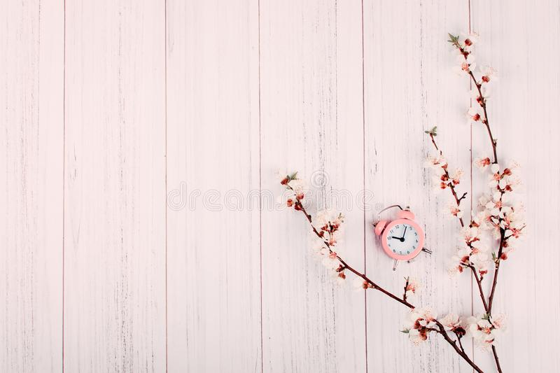 Minimal modern background, banner. Blooming cherry branch with flowers and pink alarm clock on light wooden background with copy royalty free stock image