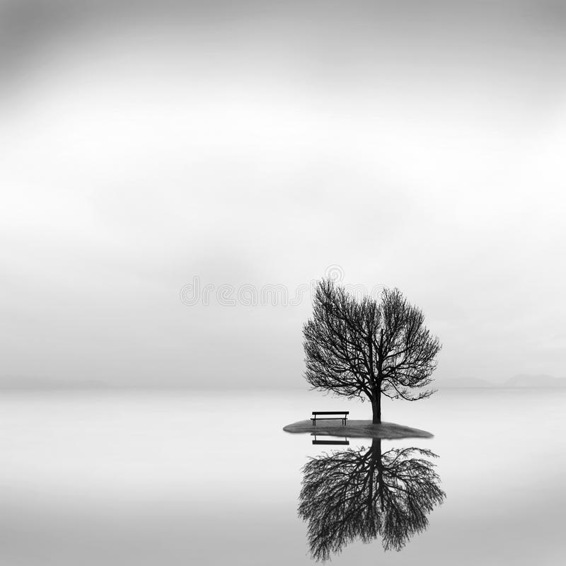 Minimal waterscape with plants and birds in the water royalty free stock images