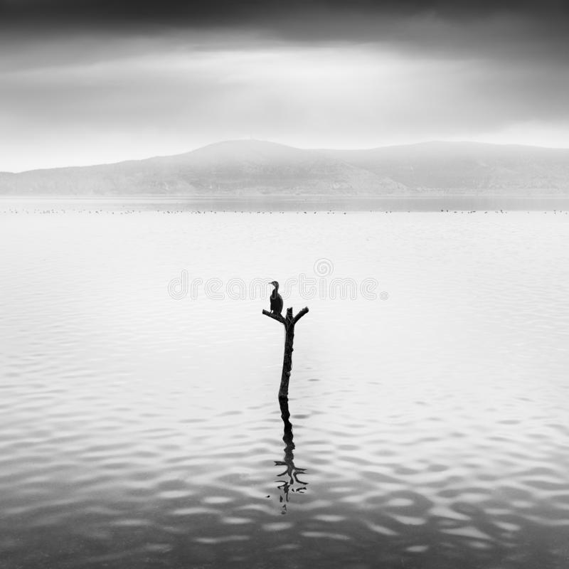 Minimal waterscape with plants and birds in the water stock images