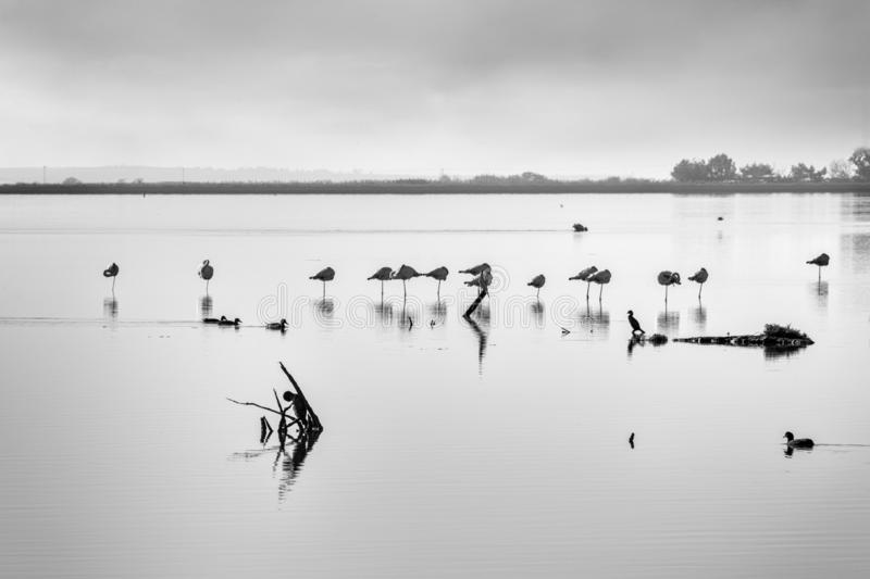 Minimal waterscape with plants and birds in the water stock photography