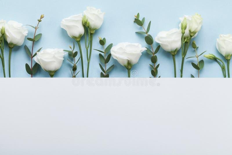 Minimale Zusammensetzung der Papierkarte verzierte schöne weiße Blumen und Eukalyptusblätter auf Draufsicht des Pastellhintergrun lizenzfreies stockfoto