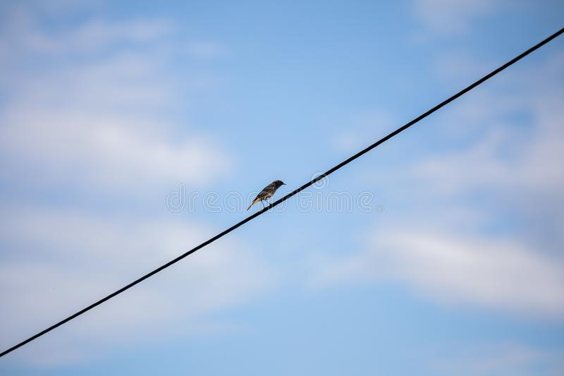 Minimalism bird in the line stock images