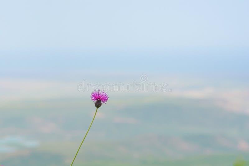 Minimalism, eenzame bloem van een distel royalty-vrije stock afbeeldingen