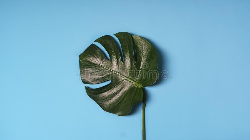 Minimalism, flatlay, Green leaf, monstera, ranquil, calm, site, window, page, web, web design, contrast, brightness, individuality stock photos