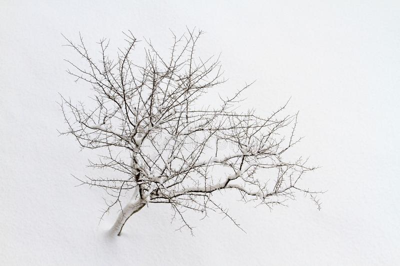 Minimalism is a lone tree among the white snow desert. Winter holidays royalty free stock images