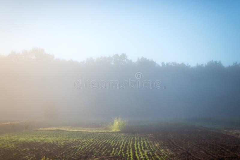 Minimalismo del paesaggio di mattina in natura, bellezza nella semplicità fotografia stock libera da diritti