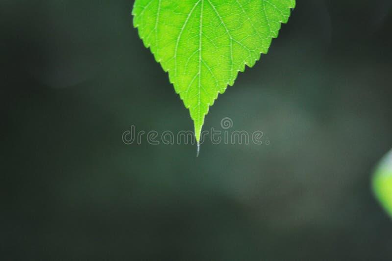 Minimalismo in natura fotografia stock