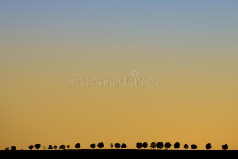 Minimalist landscape photo with yellow blue colored sky during sunset. Simple black silhouettes of alley trees in background, royalty free stock photography