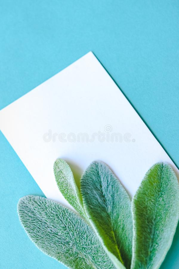 Minimalist lifestyle composition, delicate green leaves, blank pages with place for text, on blue paper background. A concept of minimalist lifestyle composition royalty free stock photos
