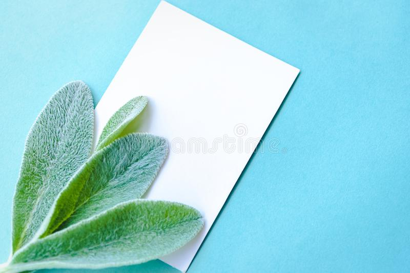 Minimalist lifestyle composition, delicate green leaves, blank pages with place for text, on blue paper background. A concept of minimalist lifestyle composition royalty free stock photo