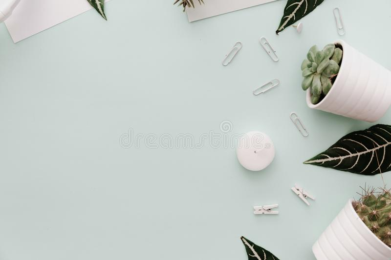 Minimalist Lifestyle For Website, Marketing, Social Media with cactus. Flowers, green leaves and supplies stock photo