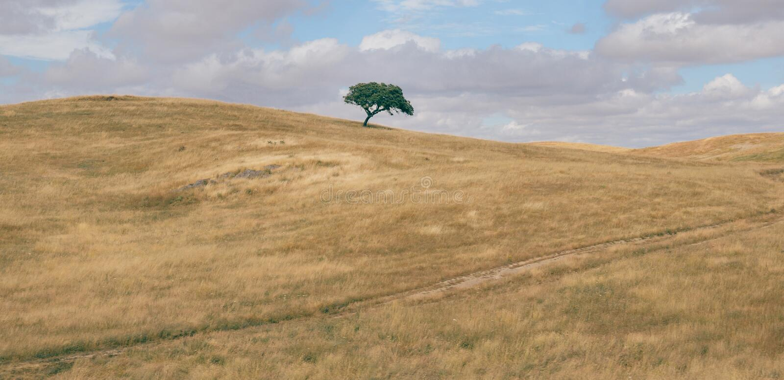 Minimalist panorama of a rolling hilly plowed field with solitary suber cork oak tree, Quercus Suber, captured at stock photo