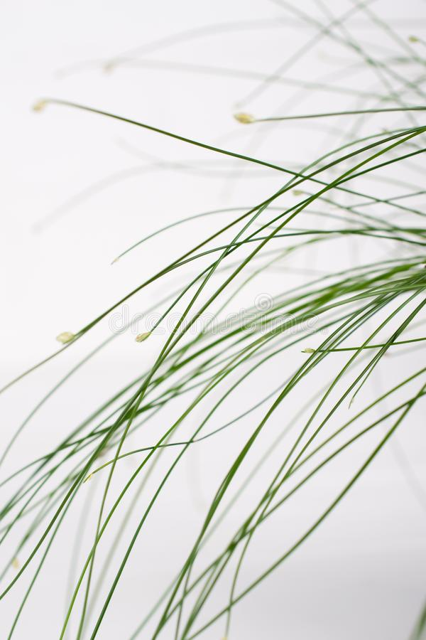 Minimalist photo of green grass, floral artistic photo, on white background. Selective focus stock images