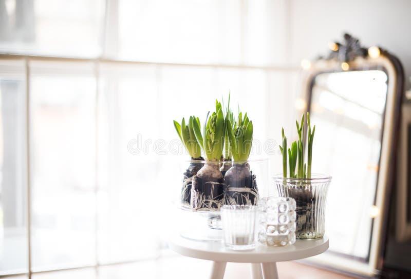 Minimalist room decor. White scandinavian spring interior, hyacinths in a jar closeup, minimalist room decor in backlight royalty free stock photo