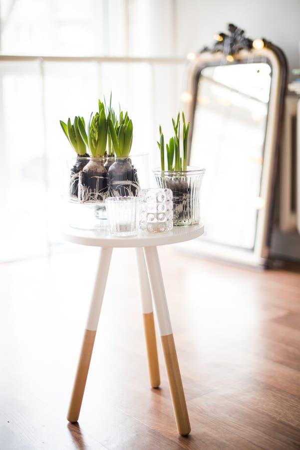 Minimalist room decor. White scandinavian spring interior, hyacinths in a jar closeup, minimalist room decor in backlight stock photo