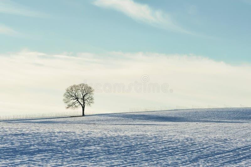 Minimalista da árvore no monte nevado fotos de stock royalty free