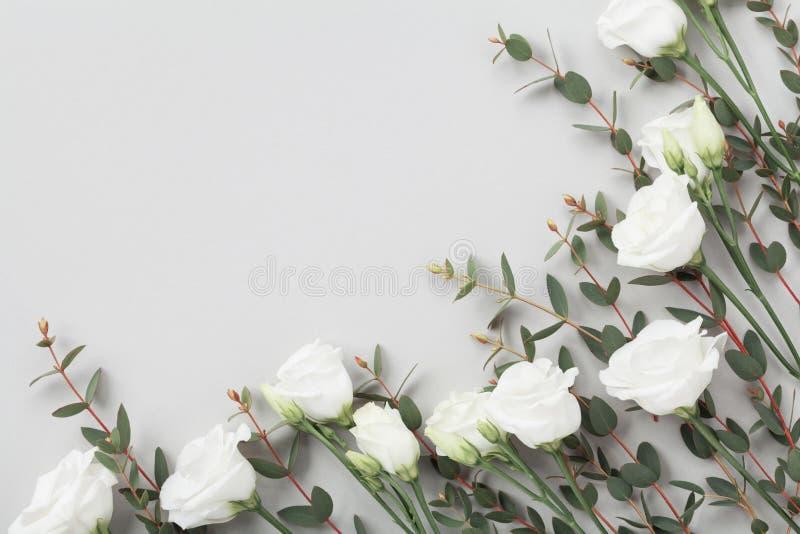 Minimalistic结构的白花和绿色玉树叶子在灰色台式视图 平的位置样式 免版税库存照片