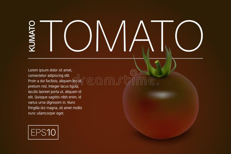 Minimalistic baner med realistiska svarta variationer för en tomatkumato vektor illustrationer