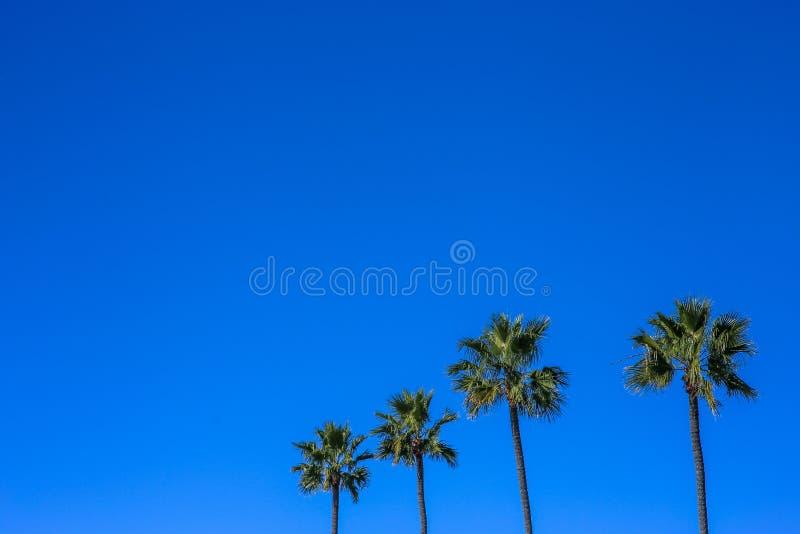 Minimalistic bild av fyra palmträd, blå livlig himmel arkivfoto