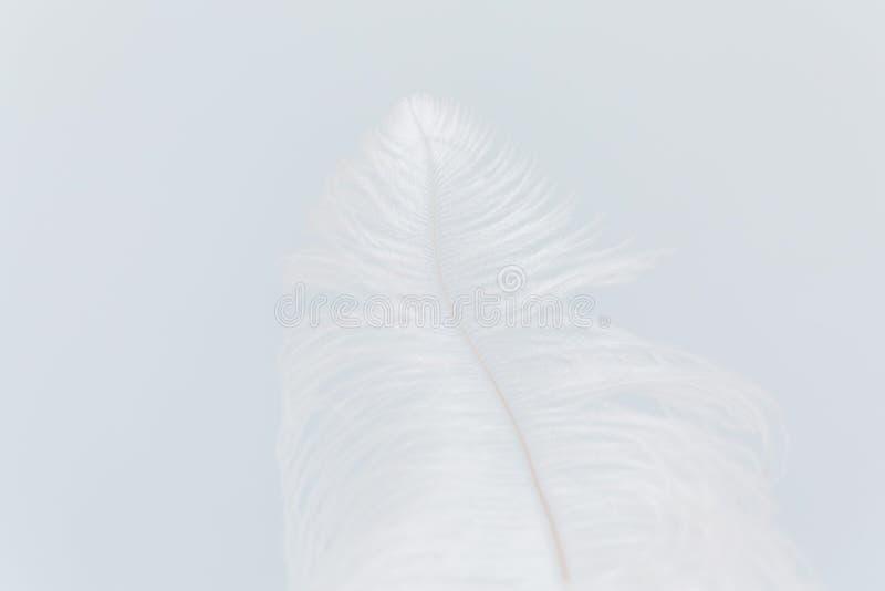 Minimalistic-Bild der Straußfeder auf hellblauem Hintergrund Hintergrund, Beschaffenheit, lokalisiert stock abbildung