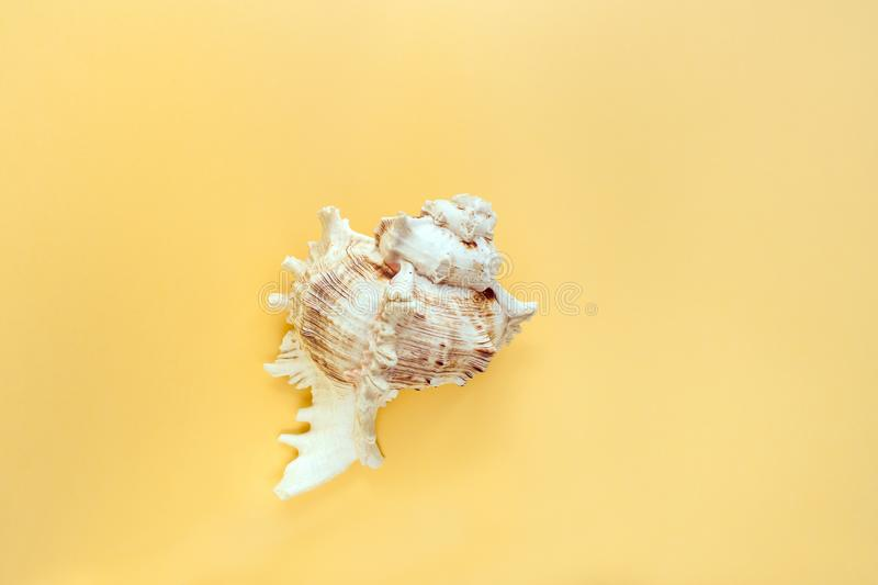 Minimalistic pastel yellow background with one textured carved seashell in the middle. royalty free stock image