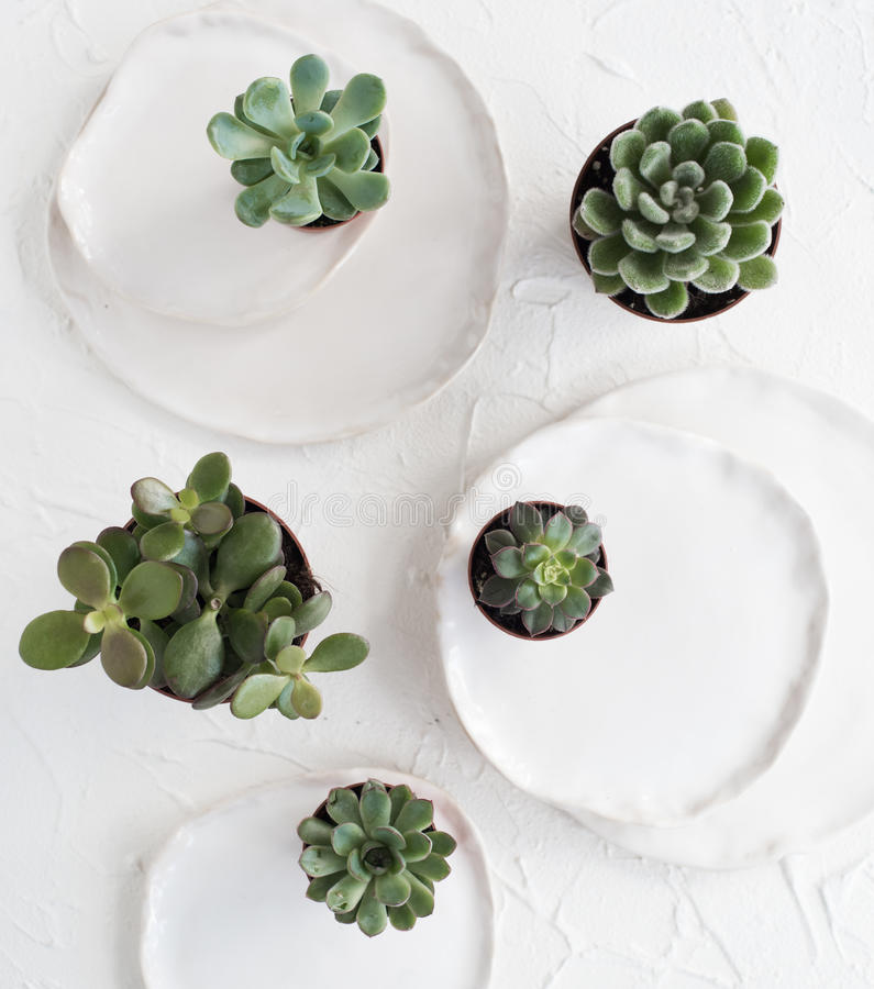 Minimalistic stilleben med keramiska plattor och gröna suckulenter arkivbilder
