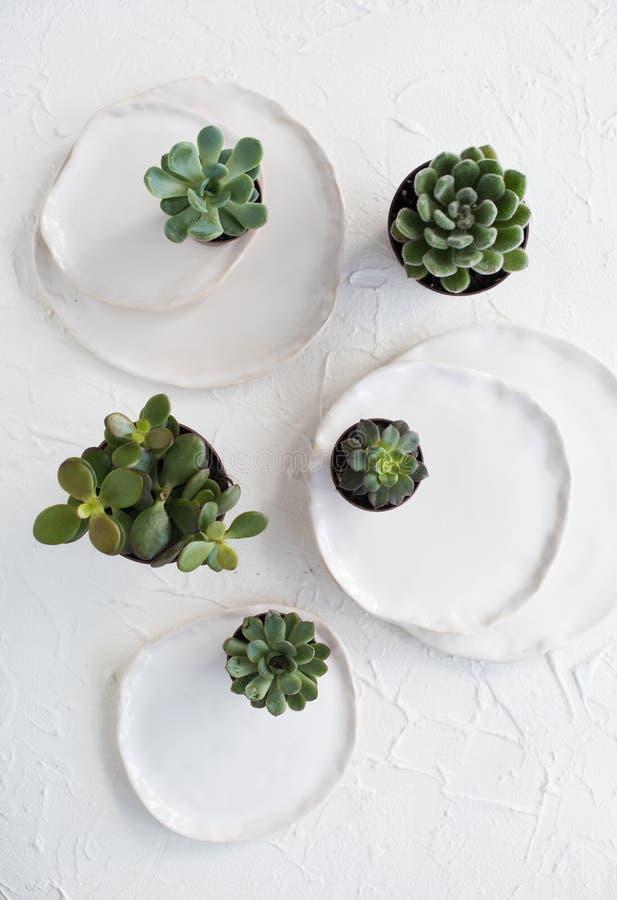 Minimalistic-Stillleben mit keramischen Platten und grünen Succulents lizenzfreies stockbild