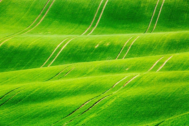 Minimalistic wiosny naturalny zielony krajobraz z zielonej trawy polami Toczni zieleni wzgórza z polem banatka wiejska wiosna obrazy royalty free