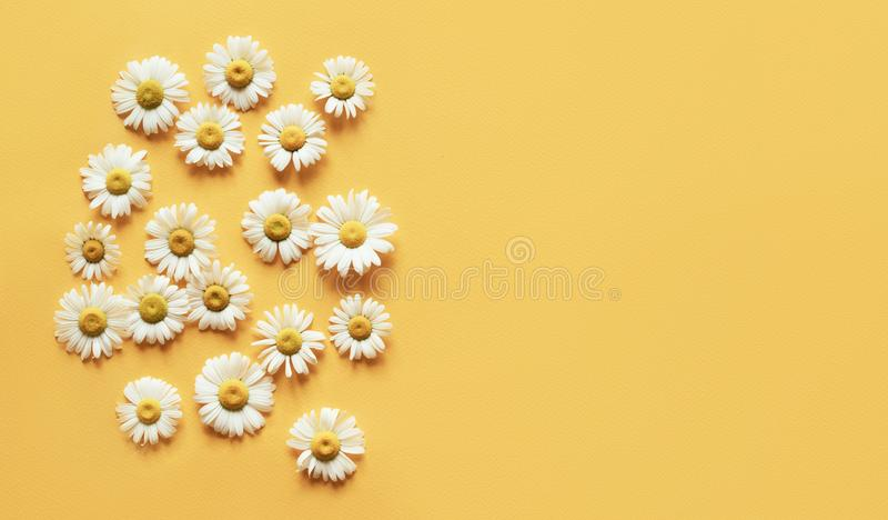 Minimalistic yellow background with camomile heads and place for an inscription. Natural concept. Spring motive stock photo