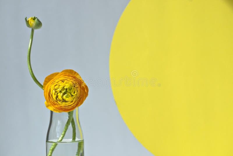 Minimalisty wciąż życie z ranunculus obrazy stock