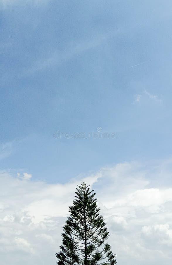 Minimalizm drzewo obraz stock