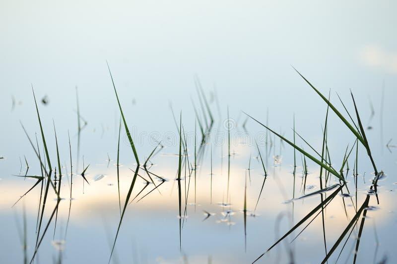 Minimalizm w naturze zdjęcie stock