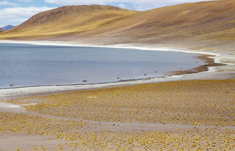 Miniques lagun i den Atacama öknen, Chile arkivfoto