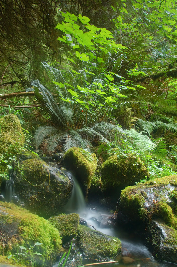 Miniture waterfall. On the floor of the rainforest in Olympic National Park stock photography