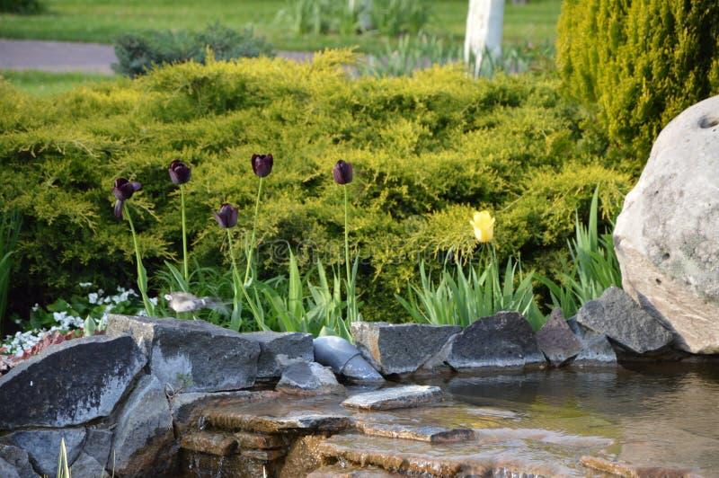 Miniwasserfall mit Büschen und Rasen lizenzfreies stockbild