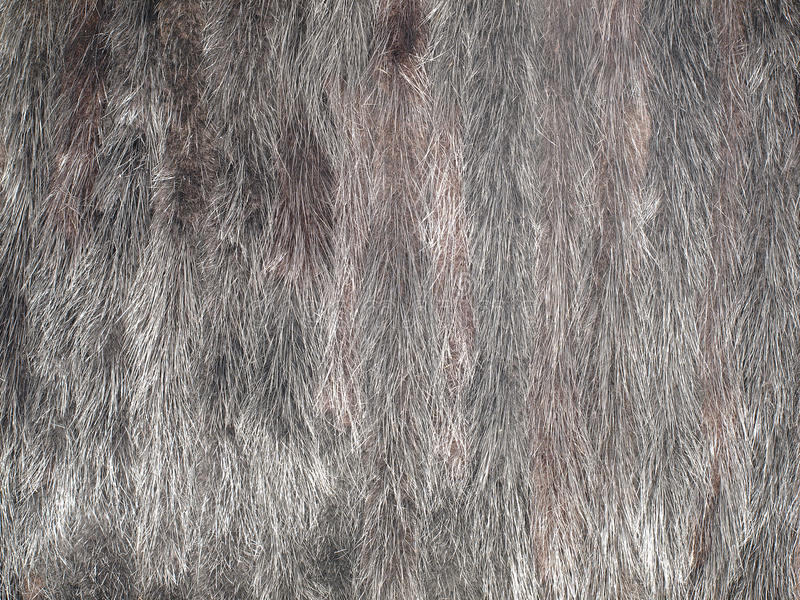 Mink Fur. Stock Photography