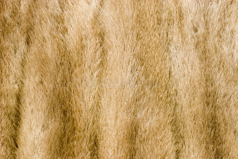 Mink fur alpha. Light brown mink fur texture royalty free stock images