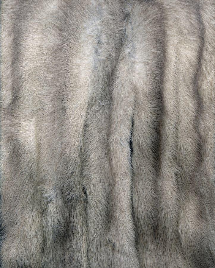 Mink Fur Gray stock photos