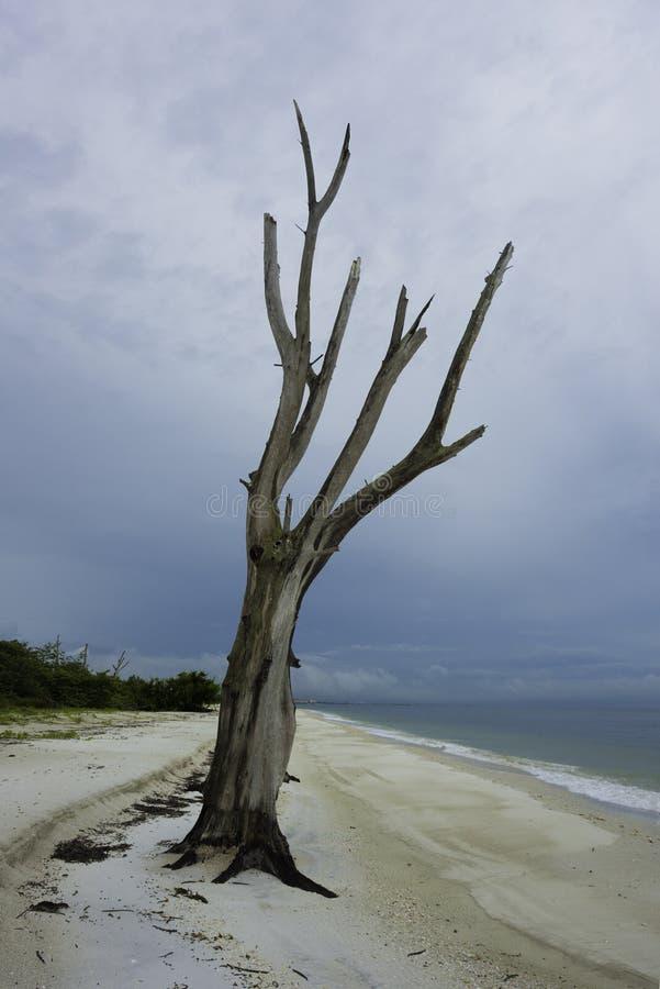 Minnaarssleutel in Bonita Springs, Florida royalty-vrije stock fotografie